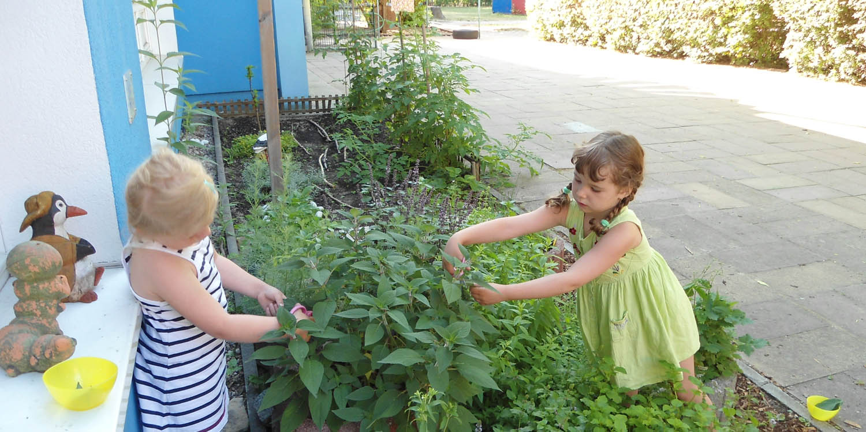 Zwei Kidner shcneiden Bläter von einer Pflanze ab.