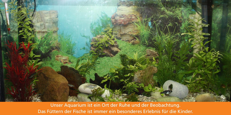 In einem Aquarium schwimmen kleine bunte Fische, umgeben von Wasserpflanzen und Steinen.